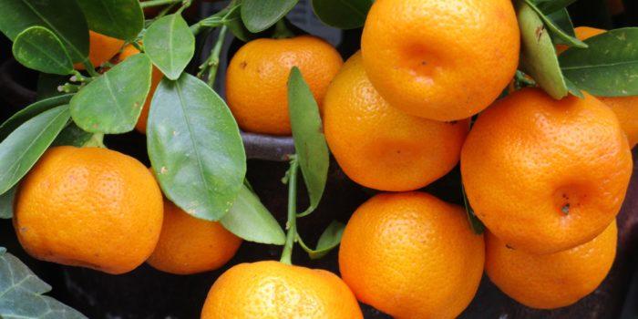 infuso freddo al mandarino, mandarino, tè, tea, tisana, infuso, cognathe, blog cognathe